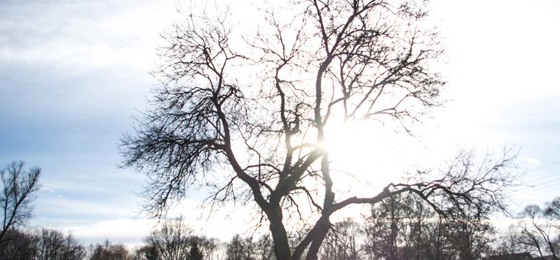 Einfach Bilder – Frühling im Winter
