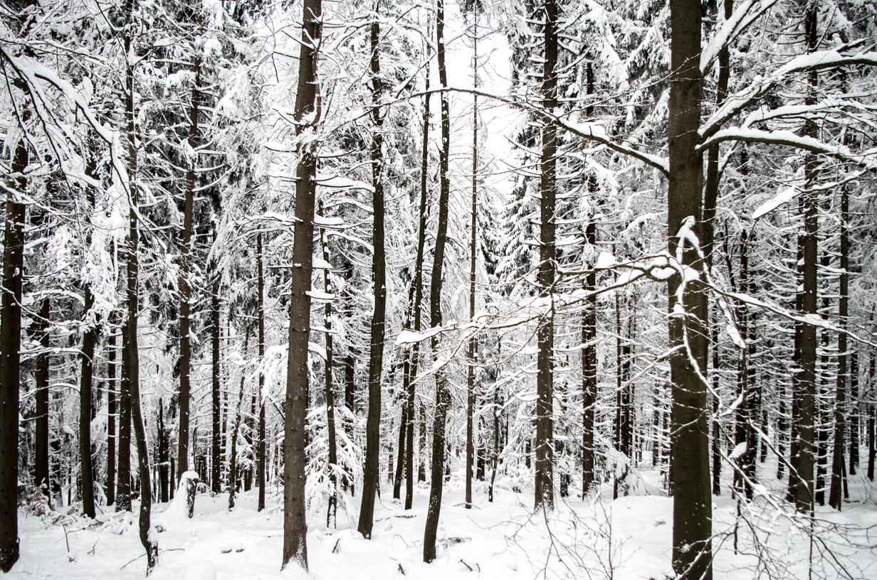 Einfach Bilder – Wintervormittag auf der Silberhütte