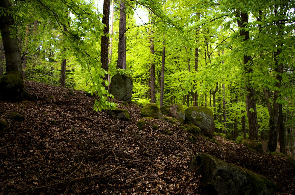 Ein Steinkreis auf dem Steinhügel – eine keltische Grabanlage