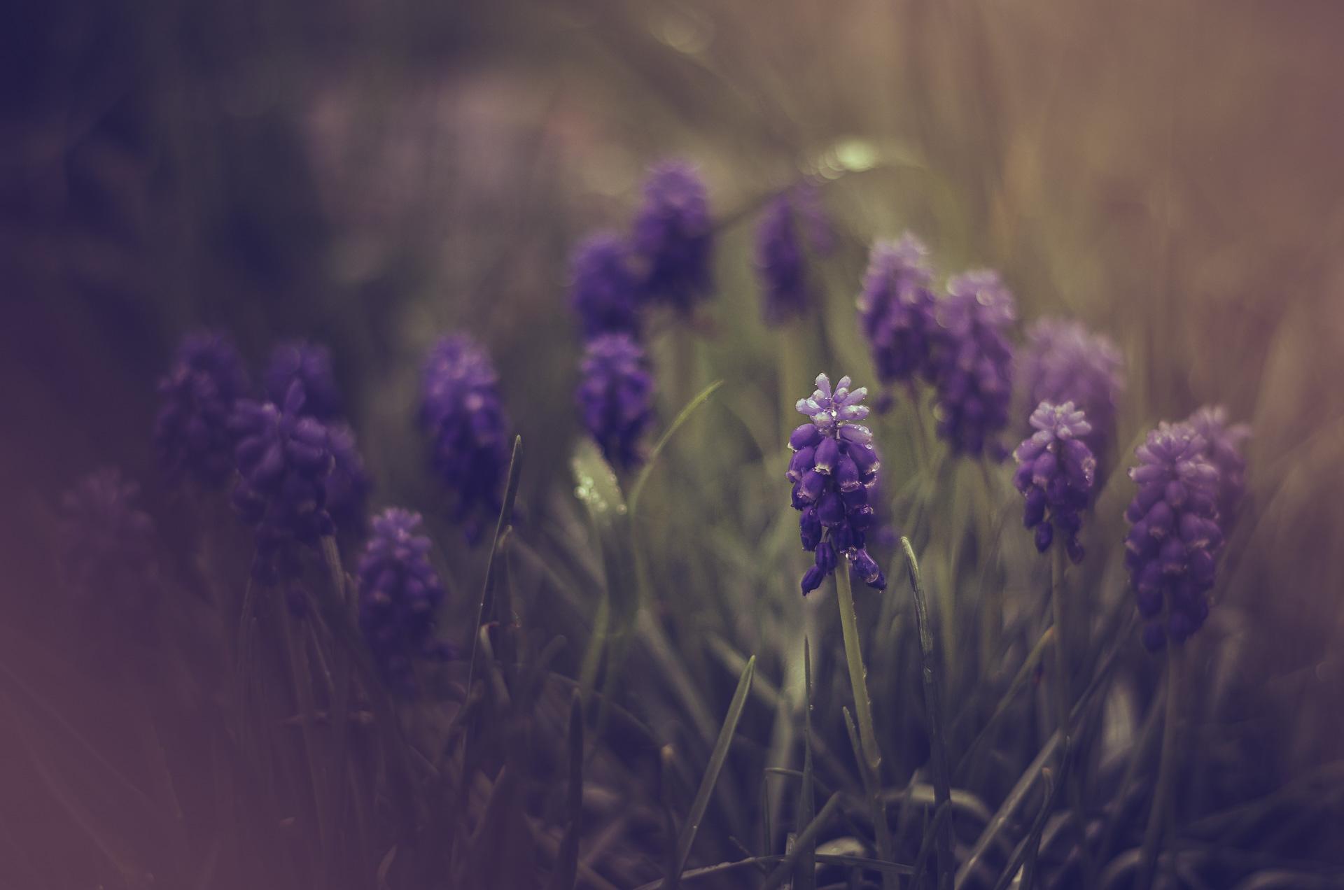 Einfach Bilder – Regenmorgen im Garten