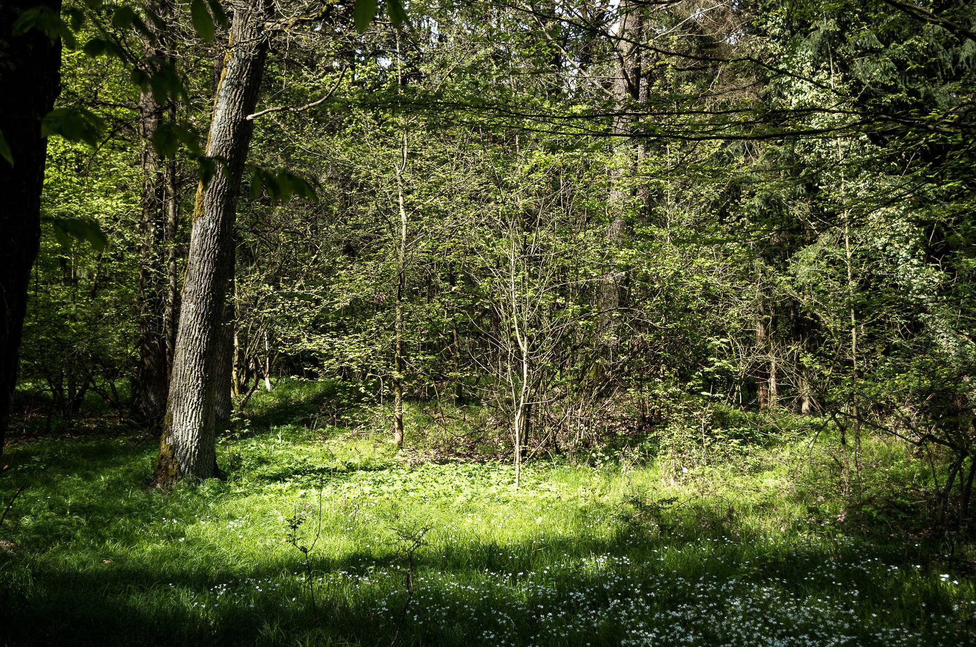 Wenn da Hügel im Wald liegen…
